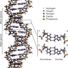Полный тест ДНК