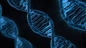 Проведение ДНК экспертизы в судебном порядке