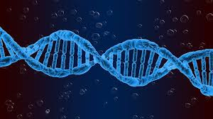 Назначение экспертизы ДНК
