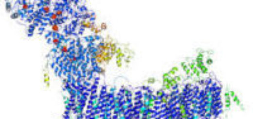 Диагностика ДНК, роль в современной медицине