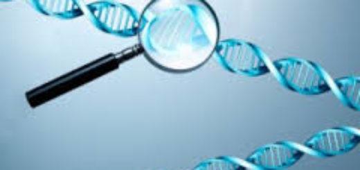 Генетический анализ стоимость