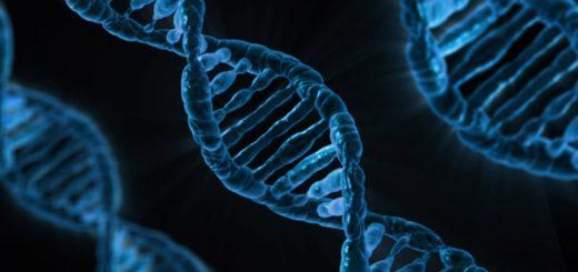 ДНК в Москве