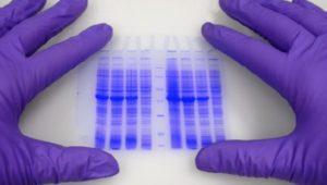 Генетическая дактилоскопия