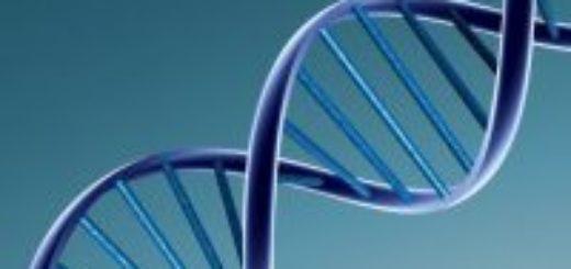 Заключение ДНК