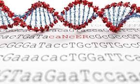 Экспертиза ДНК ― одна из востребованных услуг
