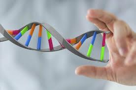 Как делают анализ ДНК