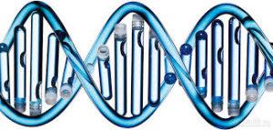 Как сдать ДНК