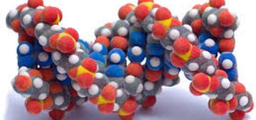 Выполнение анализа ДНК