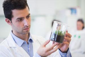 Ботаническая экспертиза