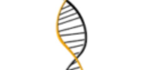 Провести анализ ДНК
