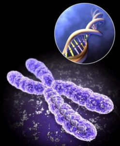 Сделать генетическую экспертизу