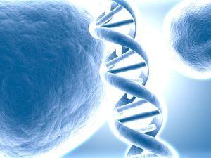 Судебно-медицинская ДНК экспертиза