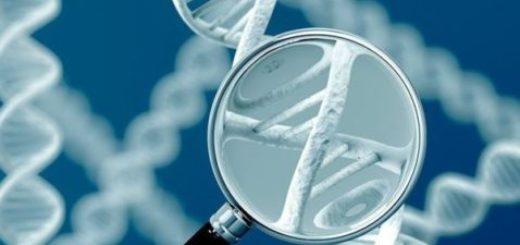 Как проверить верность жены — тест ДНК на измену