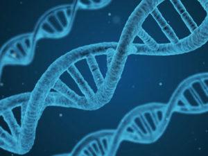 Сколько стоит чтобы сделать ДНК?