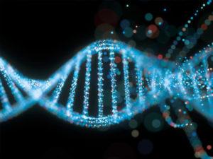 Сколько стоит экспертиза ДНК в Московской области?