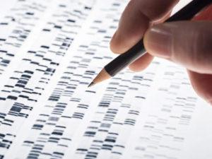 Стоимость генетической экспертизы