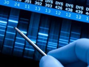 Стоимость ДНК