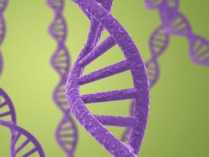 Стоимость ДНК в России