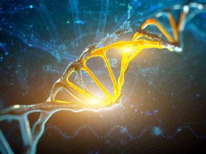 Стоимость ДНК теста на отцовство