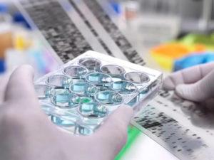 Стоимость ДНК экспертизы