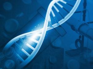 Стоимость проведения ДНК на отцовство