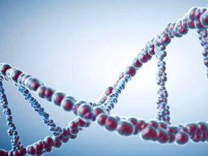 Стоимость сделать ДНК