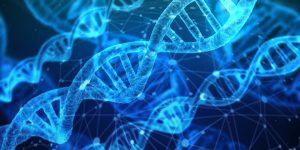 Можно ли сделать ДНК?
