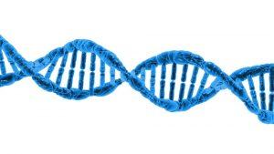 Можно ли сделать тест ДНК?