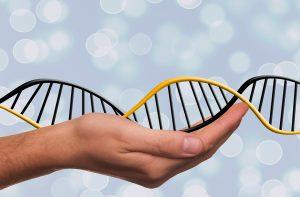 Молекулярно генетическая экспертиза