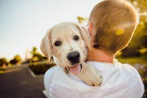 Генетическая экспертиза на отцовство животного