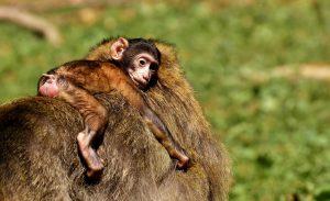 ДНК животного на отцовство в Москве стоимость