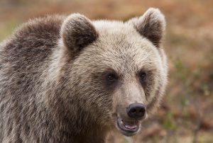 Генетический анализ животного цена Москва