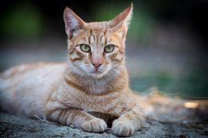 ДНК для животного Москва цены на услуги