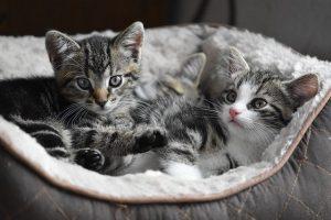 Генетическая экспертиза отцовства животного цена