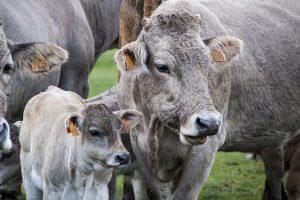 Генетическая экспертиза животного стоимость