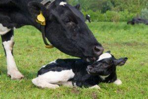 Определение отцовства цена установления отцовства