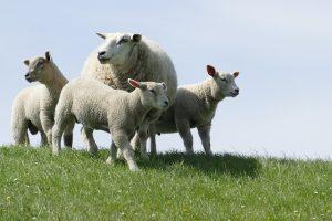 Ветеринарная экспертиза ДНК на отцовство цена