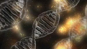 Результаты теста ДНК