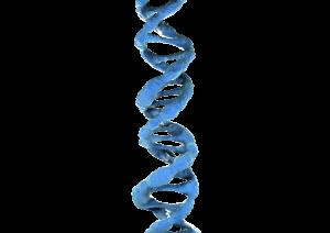 Что нужно для ДНК