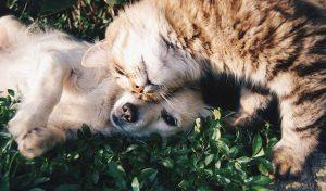 Анализ ДНК для животного