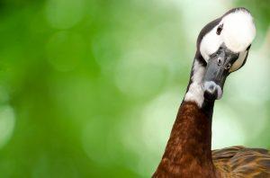 Анализы ДНК для животных цена