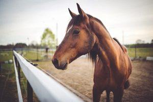 Генетический анализ животных на родство цена