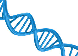 Порядок проведения ДНК экспертизы