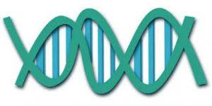 Определить отцовство по ДНК