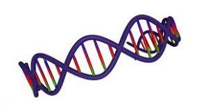 Пройти анализ ДНК
