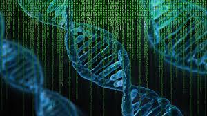 Сдать анализы на генетику