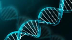 Сдать генетический анализ