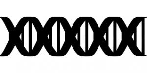 Сколько делают анализ ДНК?