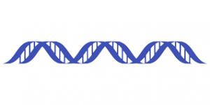 После ДНК