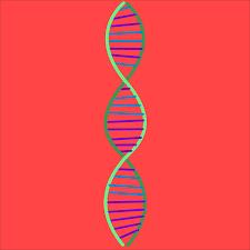 Проведение экспертизы ДНК